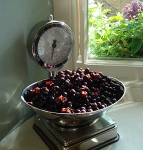 weighed-sloes