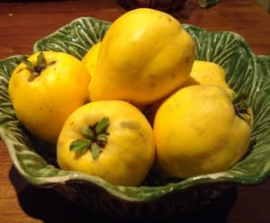 Gloriously scented golden quince